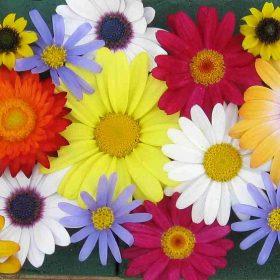 flowers 2505774 1920